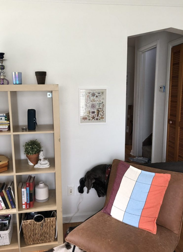 sherwin williams pure white in living room with ikea kallax shelves