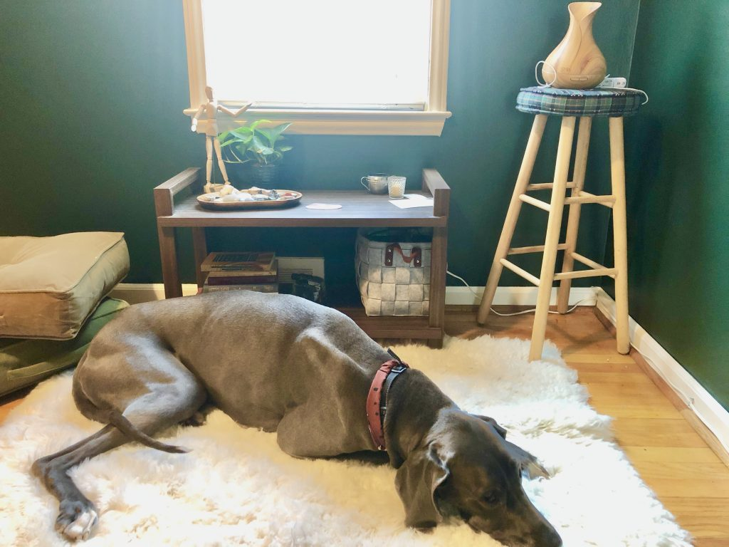 great dane dog laying on a fur rug in front of meditation space table